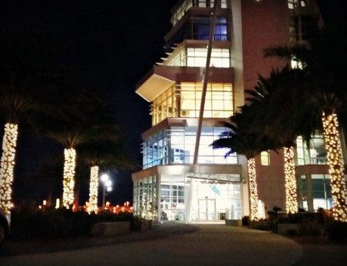 Trees at Port Canaveral