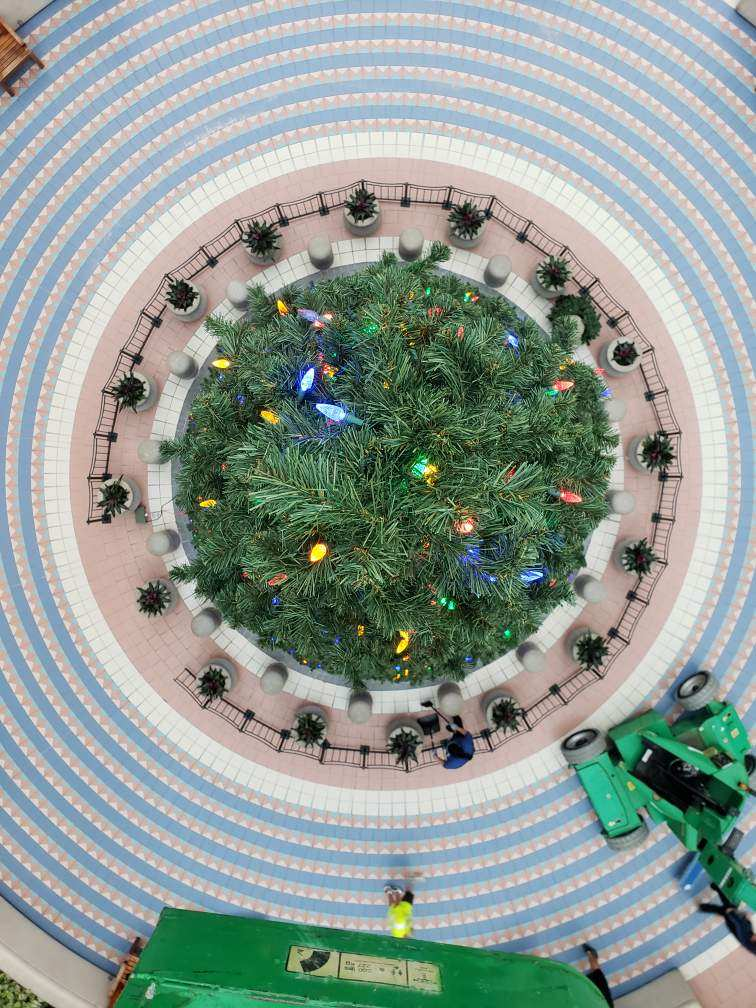 A view of a 50 foot tree from directly above